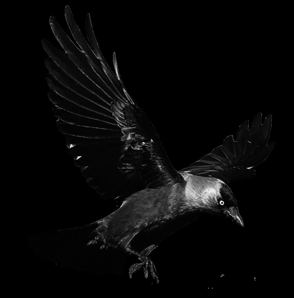 image download Flying transparent background peoplepng. Vector raven
