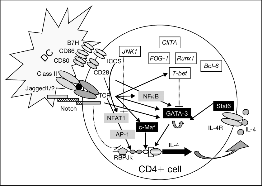 transparent download Molecular pathways involved in the expression of the IL