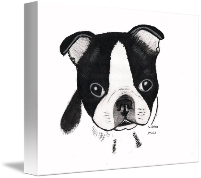 black and white download Drawing charcoal dog. Boston terrier puppy by