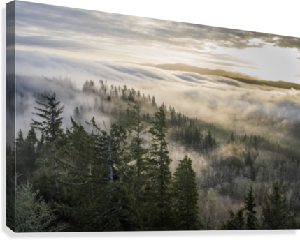 banner library stock Fog and forest seen from Coxcomb Hill