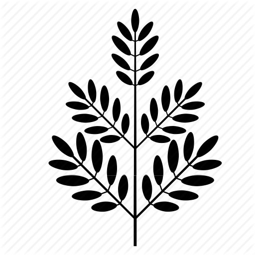 png black and white download foliage drawing nature #112931705
