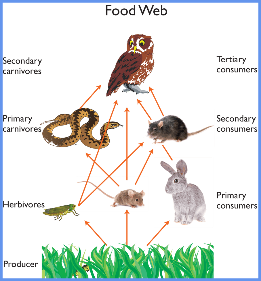 clip art download Inspiring owl nce and. Food web clipart