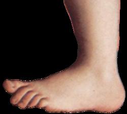 jpg royalty free stock foot transparent monty python #112944500