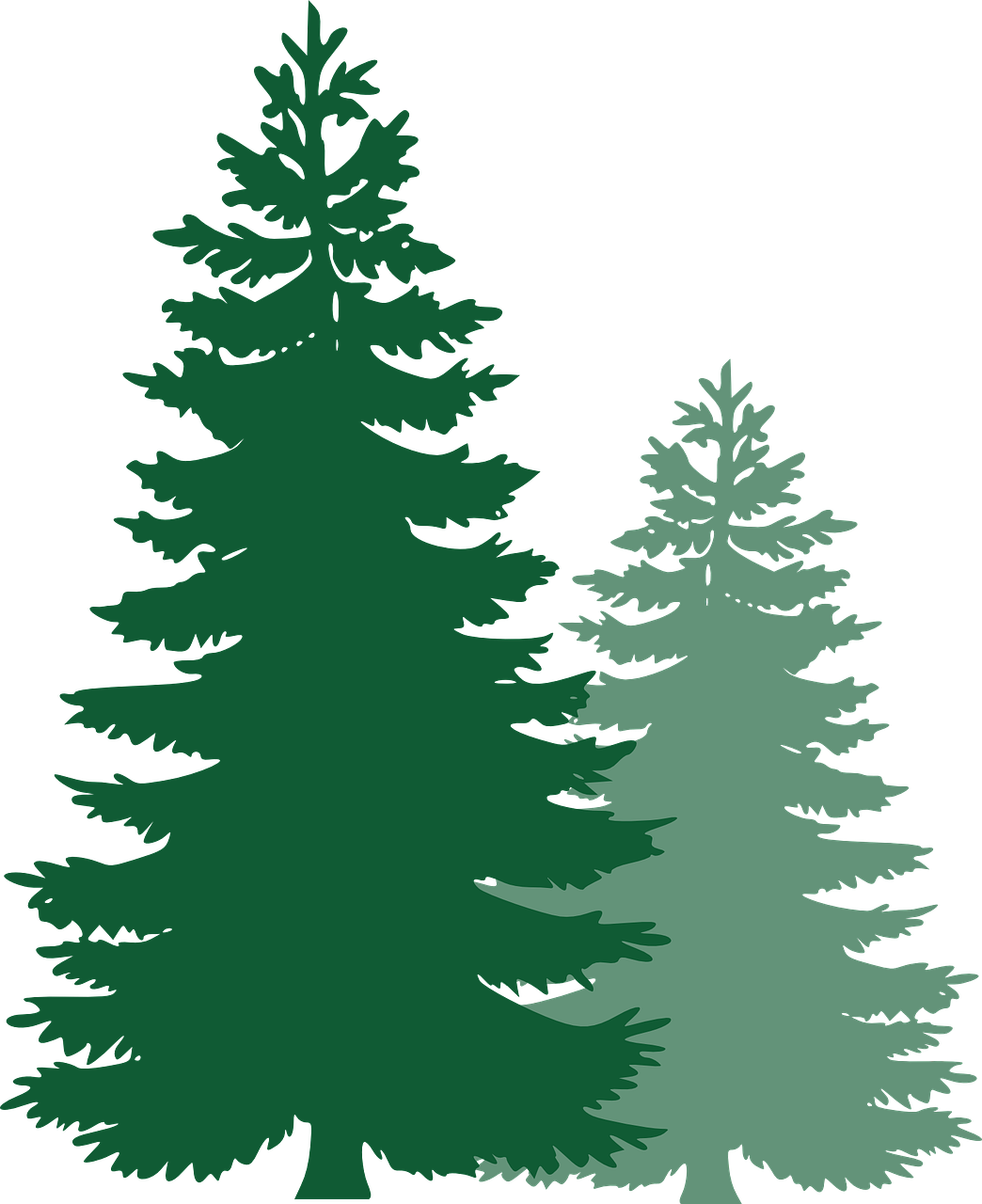 picture free stock Pine trees spruce evergreen. Forest clipart coniferous forest