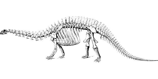 banner freeuse library Fossil clipart dino fossil. Free image on pixabay