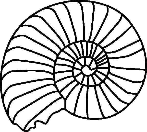 picture transparent Spiral Shell Clip art