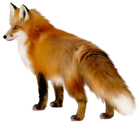 banner transparent stock Transparent Fox Clipart