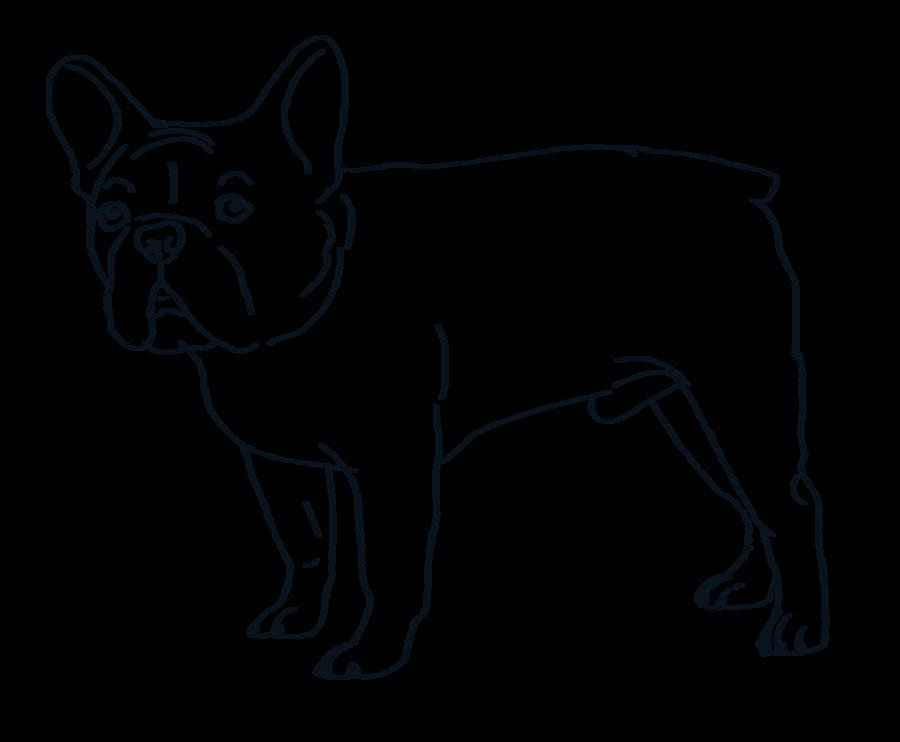 jpg library stock French Bulldog Line Drawing at GetDrawings