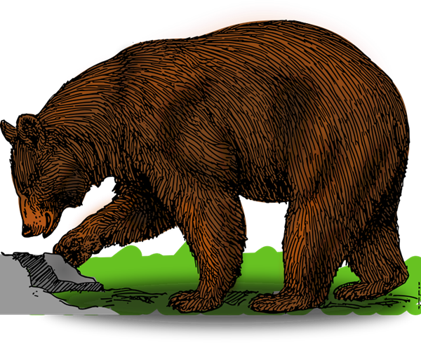 graphic stock Bear Clip Art Free Download
