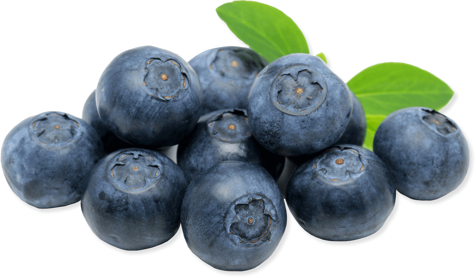 free download Blueberries icon web icons. Transparent fruit blueberry
