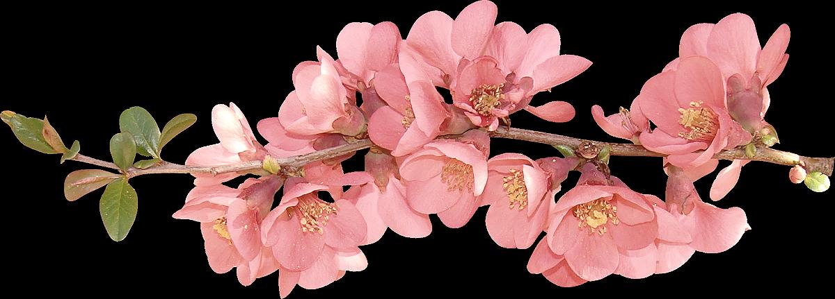 clip art library spring transparent blossom #103609363