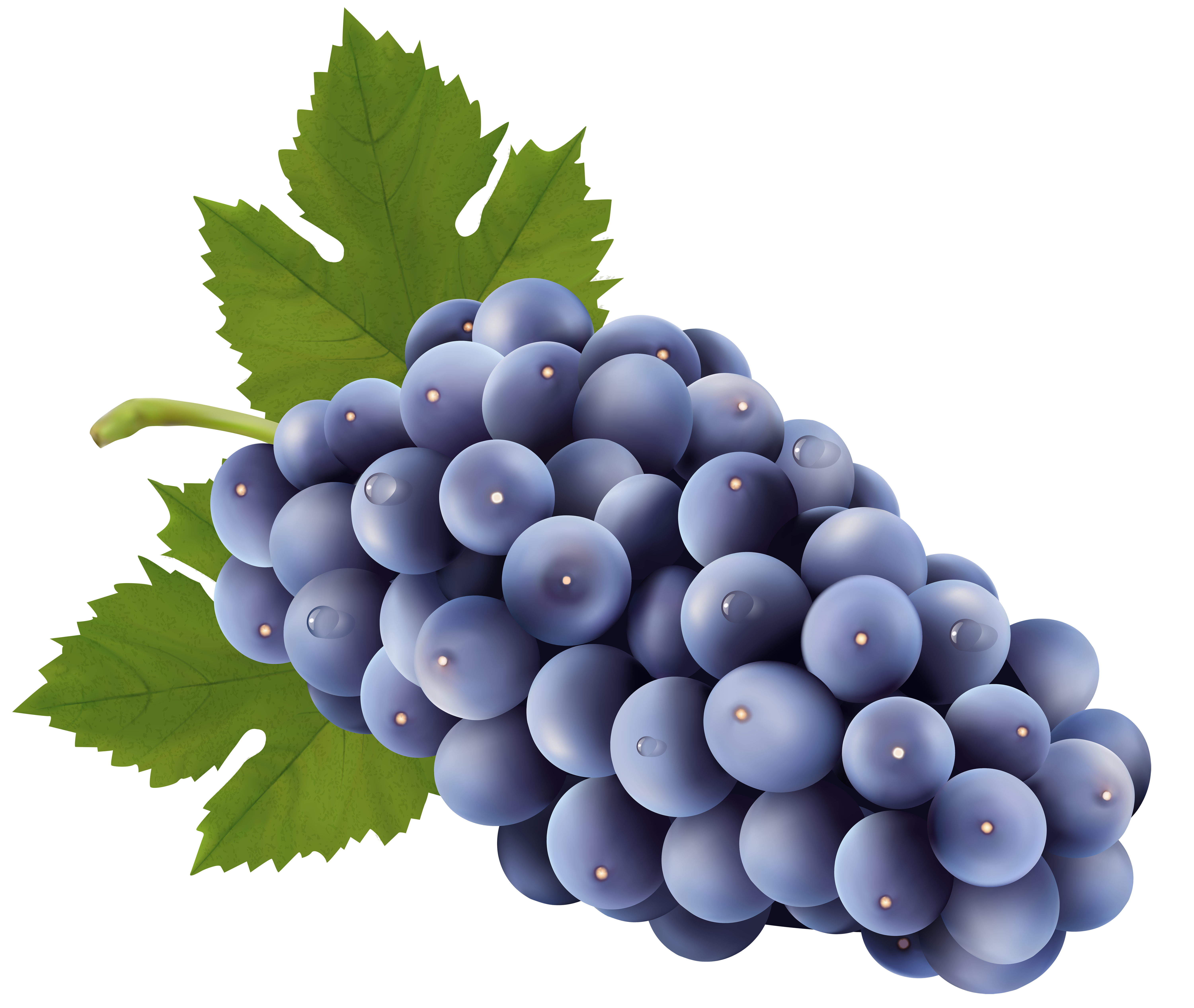 banner black and white Grapes Free PNG Clip Art Image