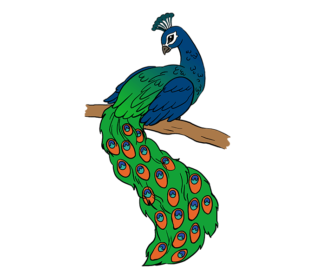 clipart royalty free download Drawing topic colorful. Peacock pencil sketch realistic