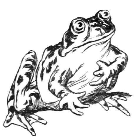 transparent library Frogs clipart black and white. Cartoon frog drawing at
