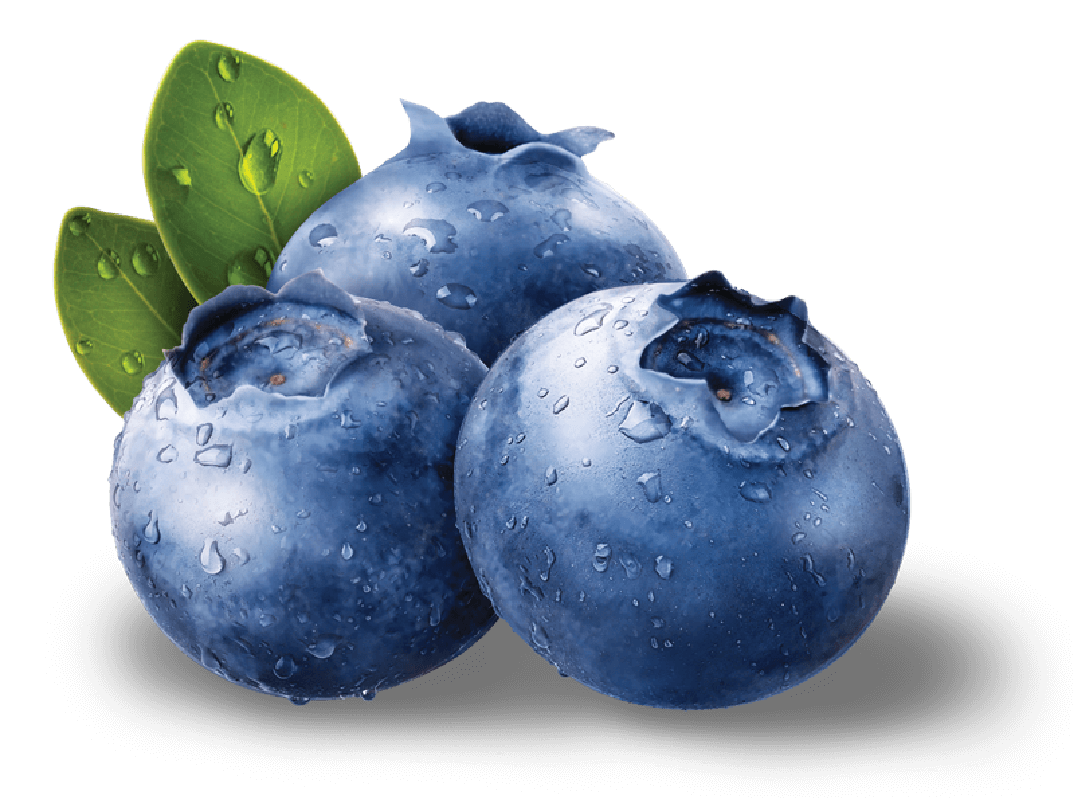 png library library Transparent fruit blueberry. Blueberries png