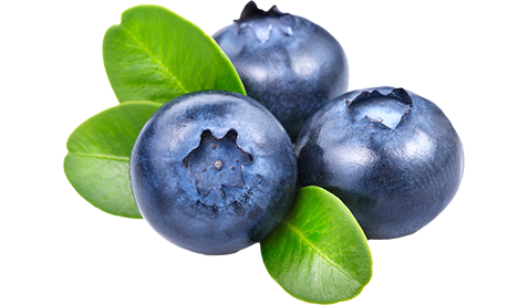 picture black and white download Transparent fruit blueberry. Blueberries westmoreland berry farm