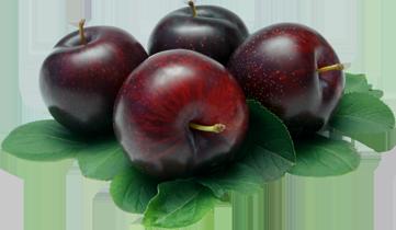 graphic transparent library Fruit transparent plum. Png images free download