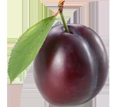 image transparent download  load nut pngimg. Fruit transparent plum