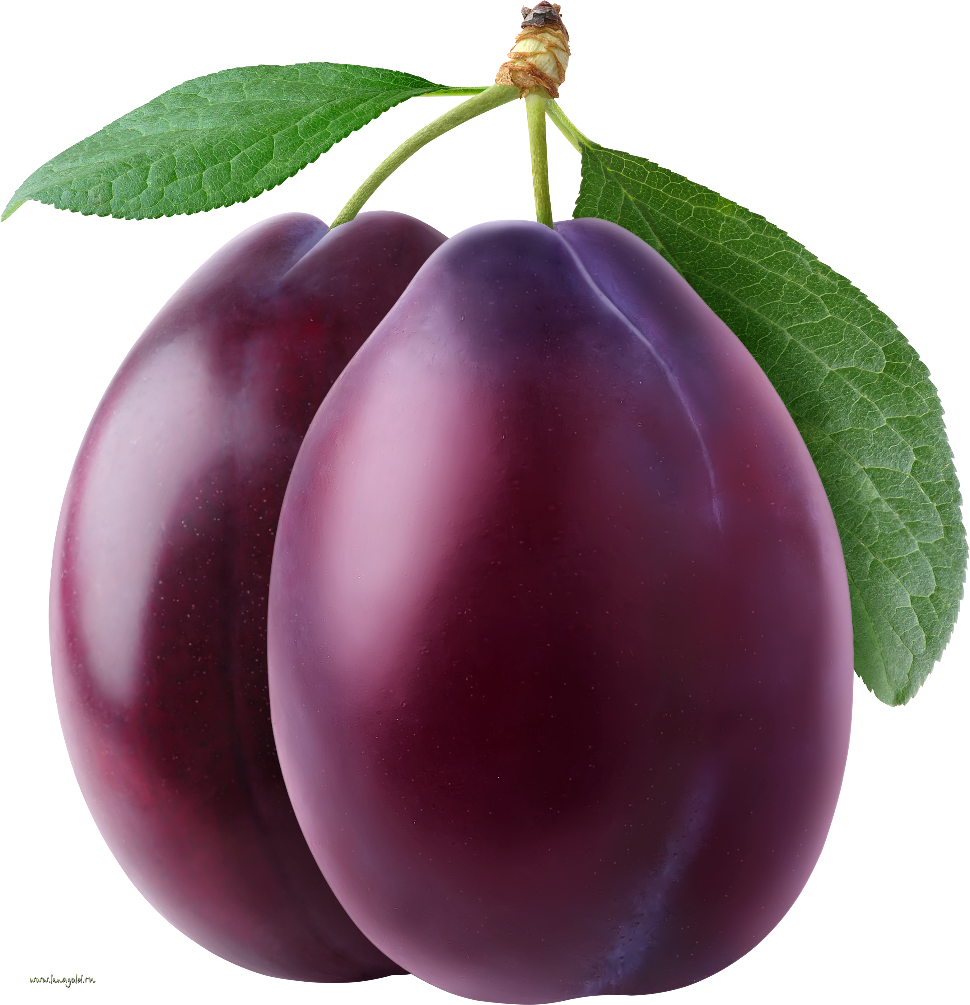 png black and white stock Fruit transparent plum. Free png plums images