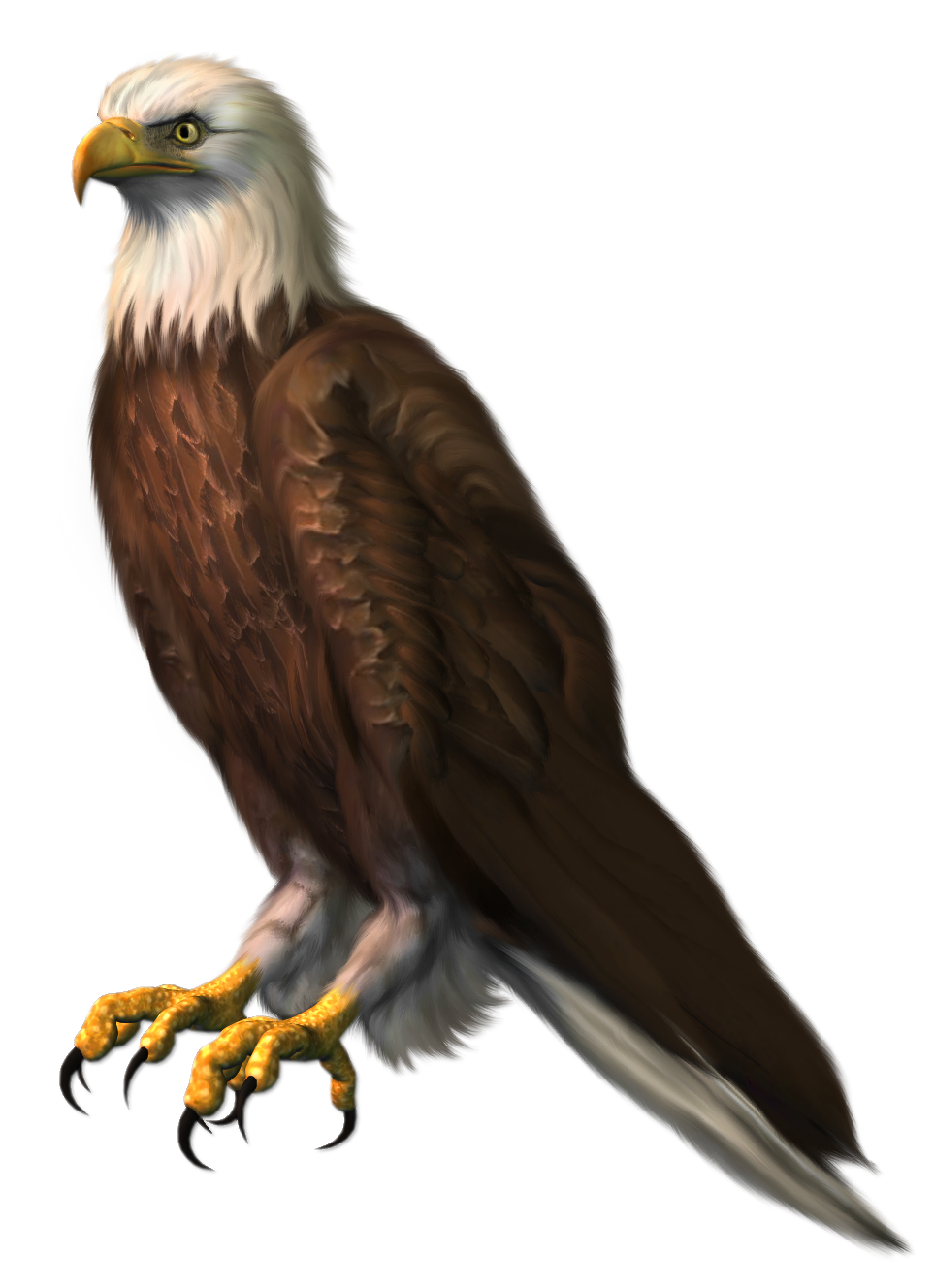 clipart transparent library Eagle transparent png picture. Gallery clipart eagel.