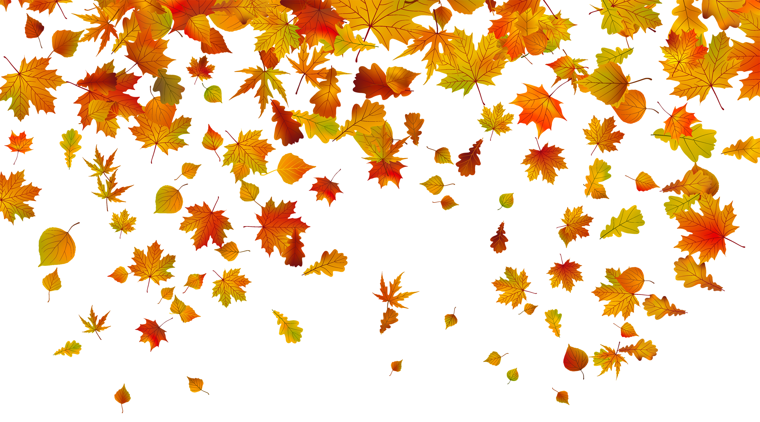 freeuse library Fall leaf border clipart. Transparent leaves png image