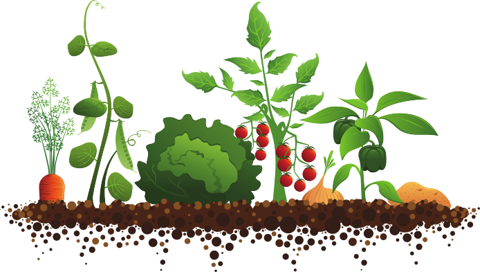 image royalty free library Vegetable and z lds. With clipart garden