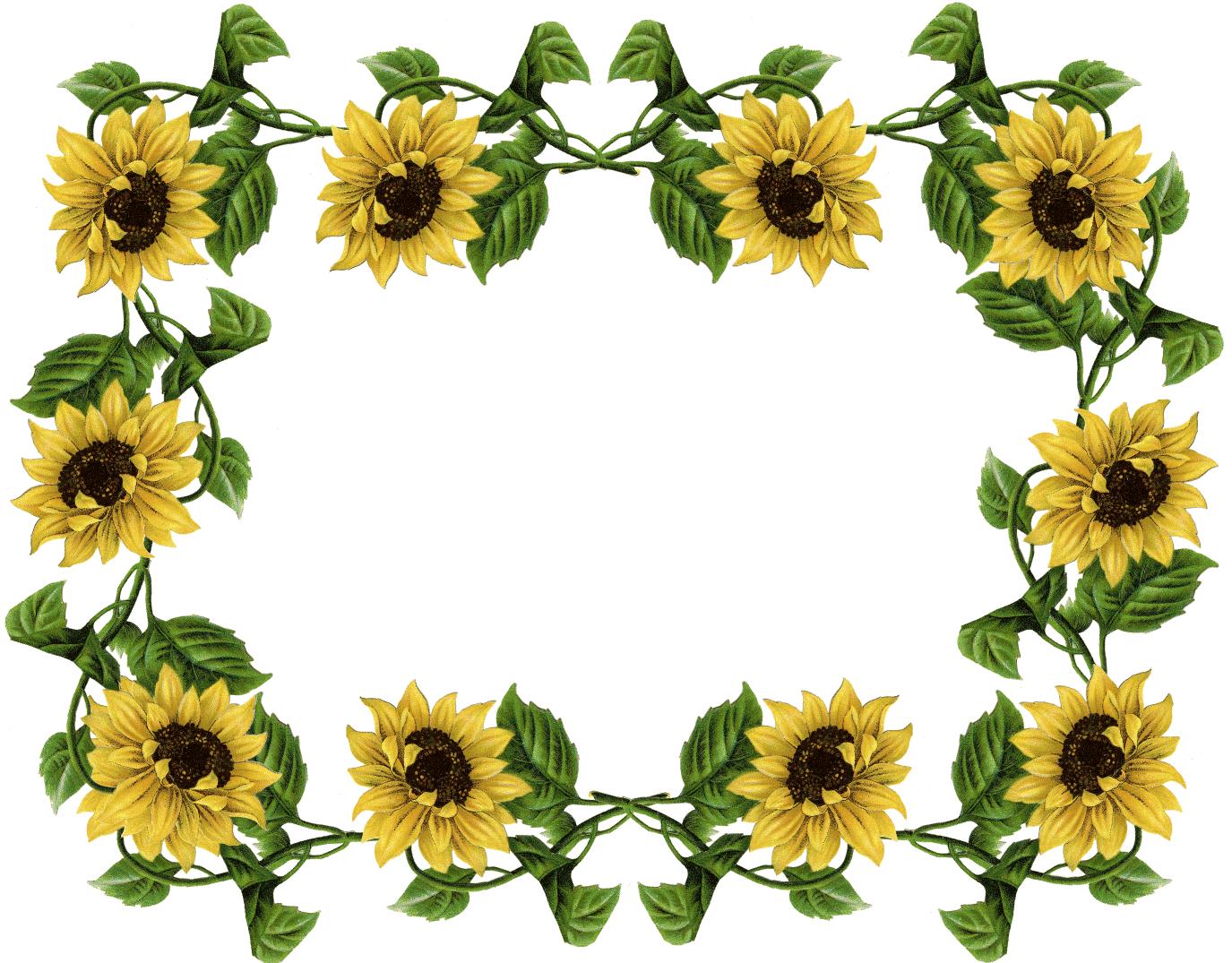 jpg stock Sunflower pics frame pinterest. Sunflowers clipart wedding