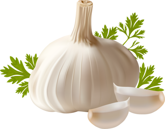 jpg royalty free Free cliparts download clip. Garlic clipart