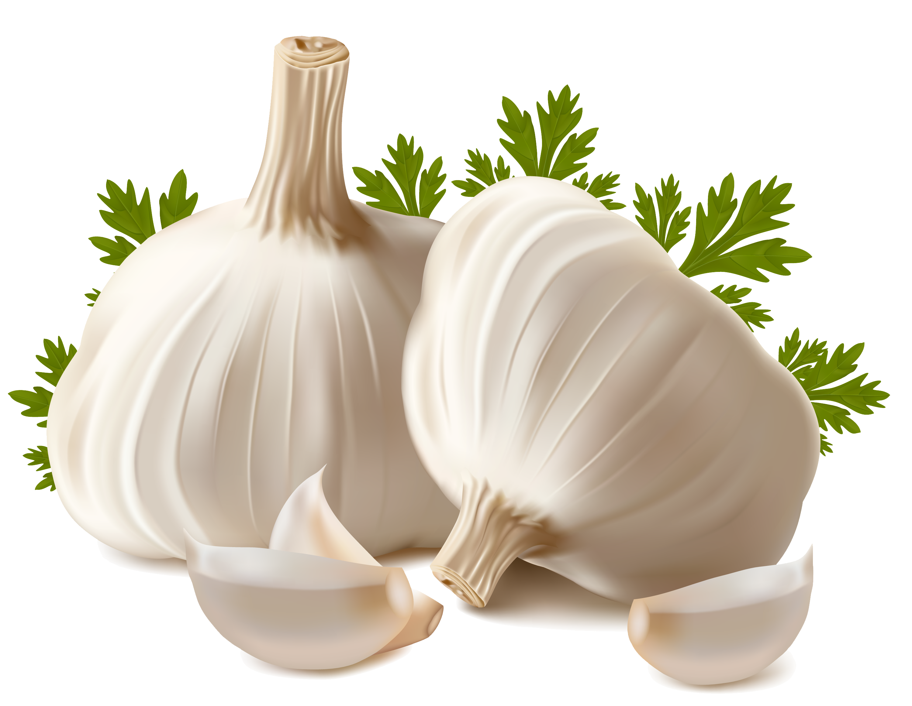 graphic royalty free Png mart. Garlic clipart