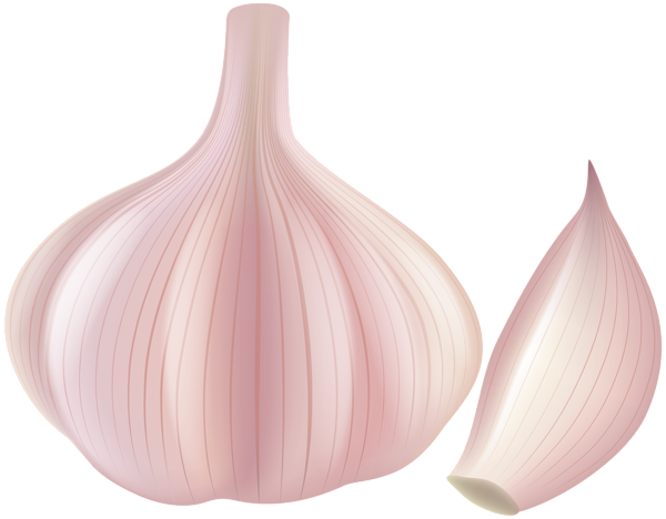 clip free download Png clip art gallery. Garlic clipart