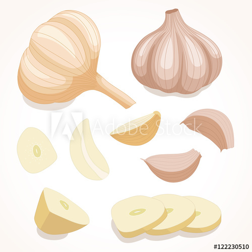 banner royalty free stock Garlic vector. Fresh whole illustration cloves