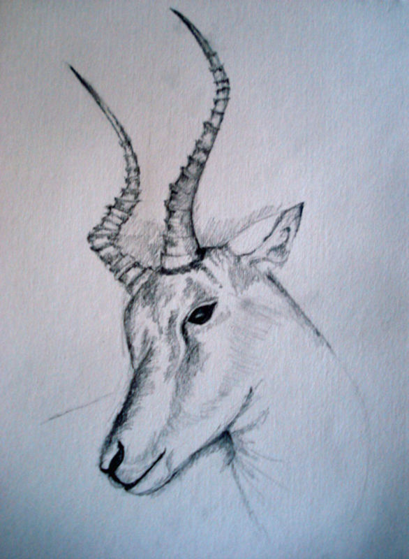 vector transparent stock Gazelle