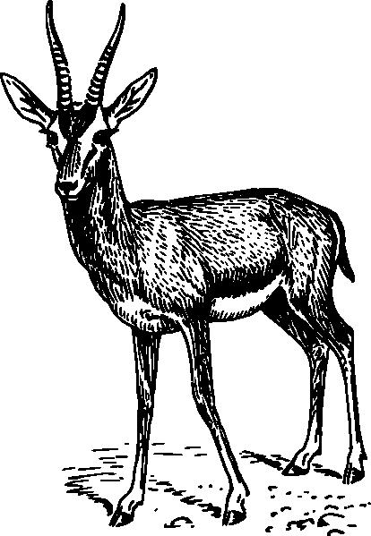 jpg black and white Gazelle Drawing at GetDrawings