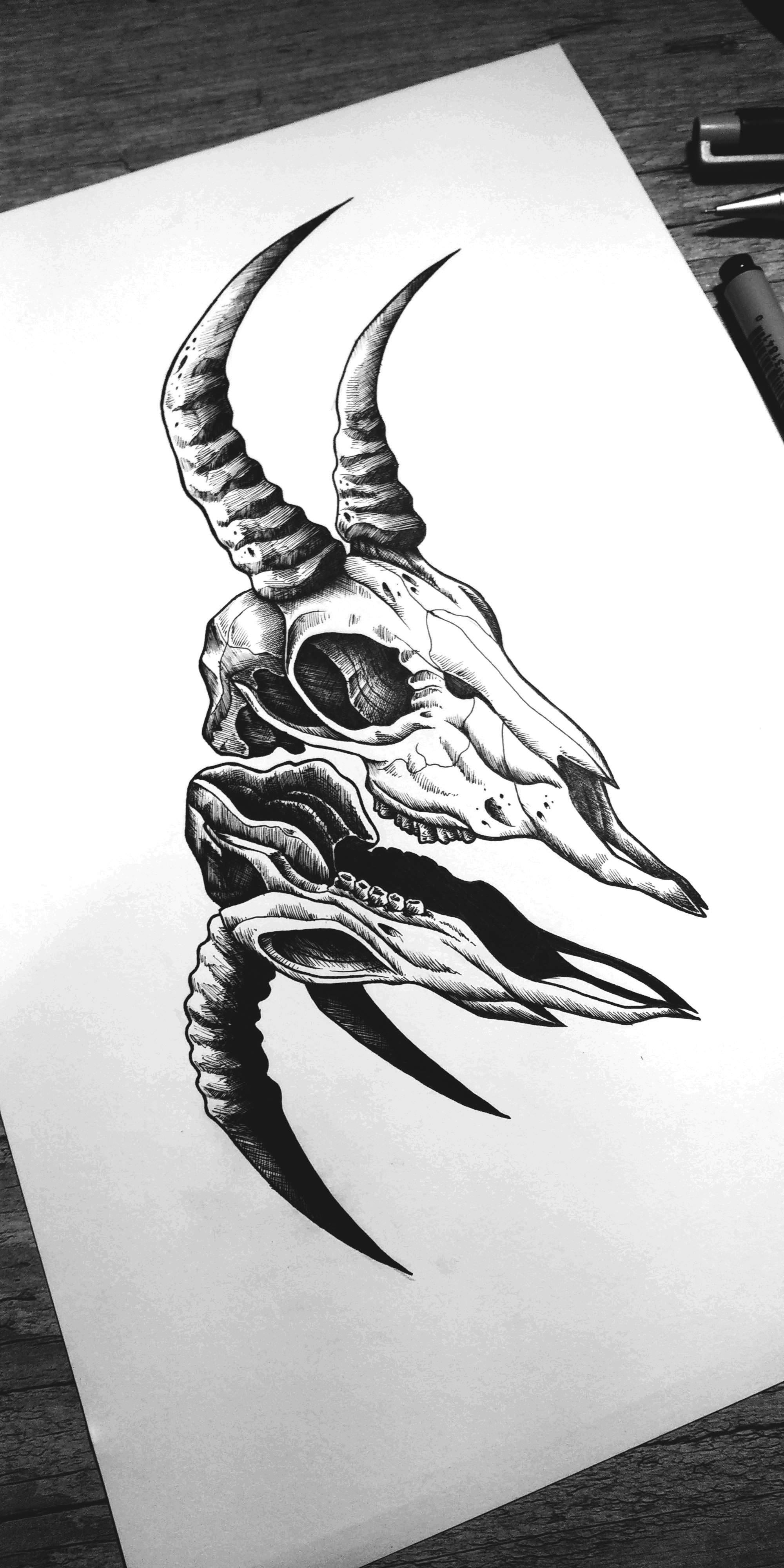 banner stock Gazelle drawing skull. Skulls and pens