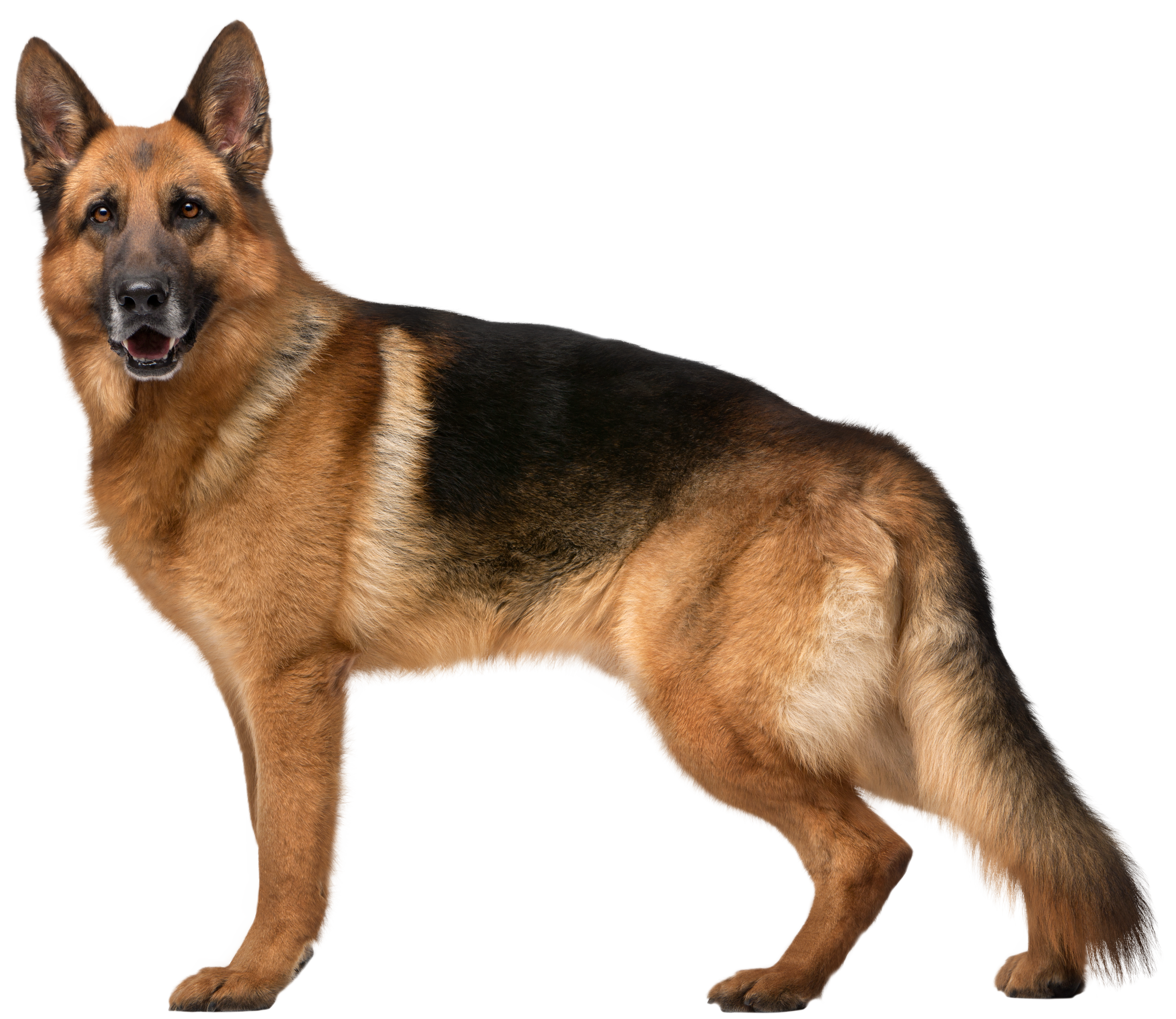 png black and white stock German Shepherd Dog PNG Clip Art