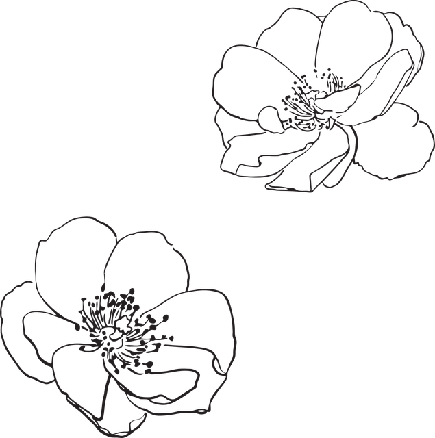 freeuse download Free image on pixabay. Drawing photography flower