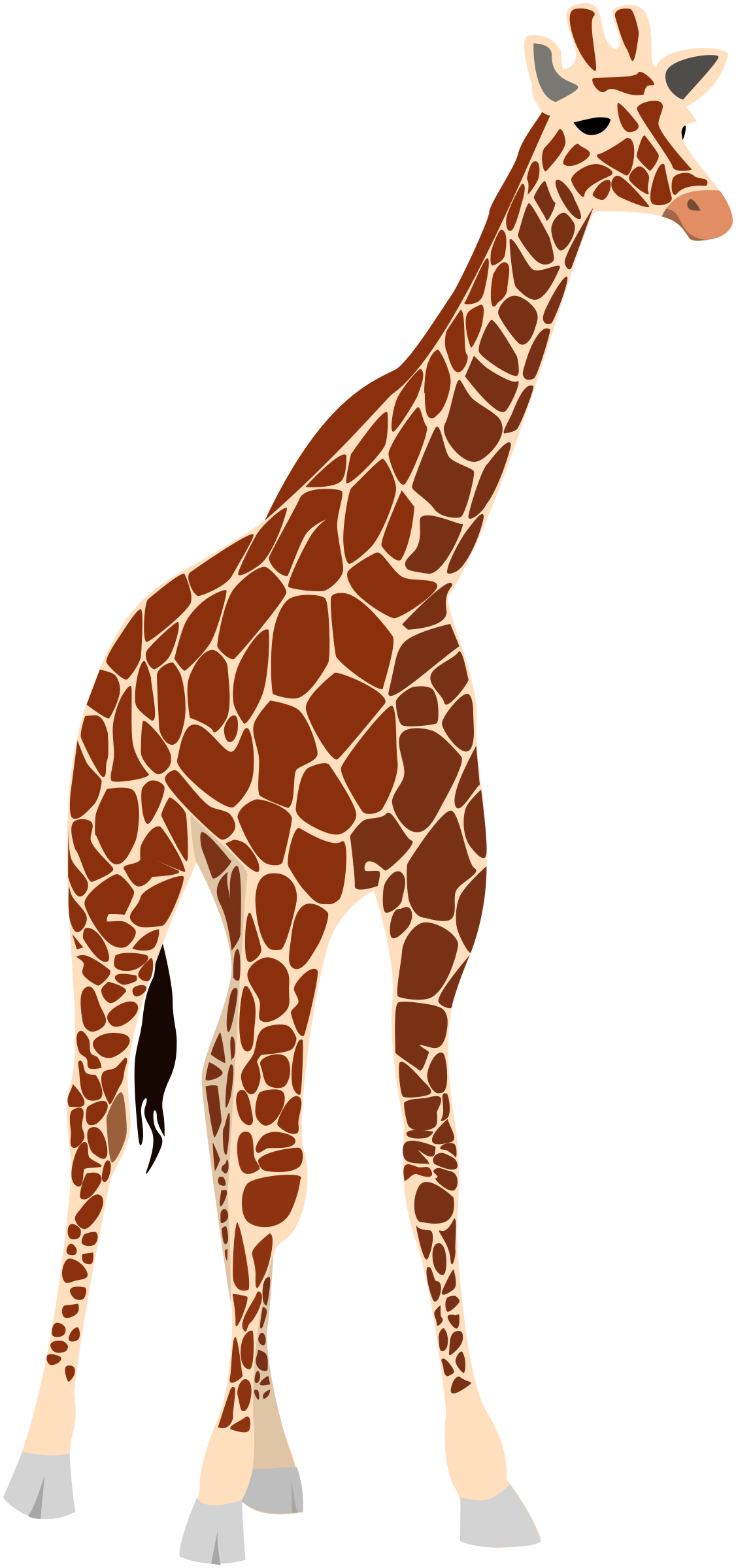 transparent Another big image png. Giraffe clipart