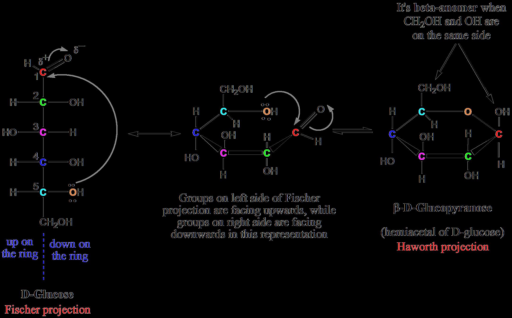 banner library stock Cyclic hemiacetals and hemiketals