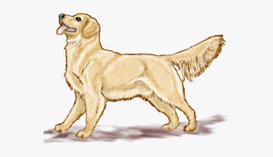 clip art freeuse download Labrador face clip art. Golden retriever clipart.
