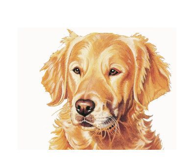 png freeuse Golden retriever clipart clip art. Free dog library