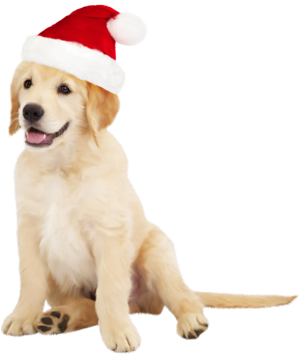 clipart freeuse stock Cute with santa hat. Golden retriever clipart one dog