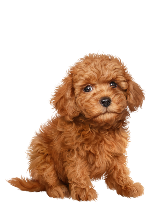 graphic library library Lab puppy clipart. Chiens dog puppies wallpapers