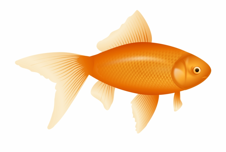 svg black and white library Goldfish clipart. Fish one pngtube .
