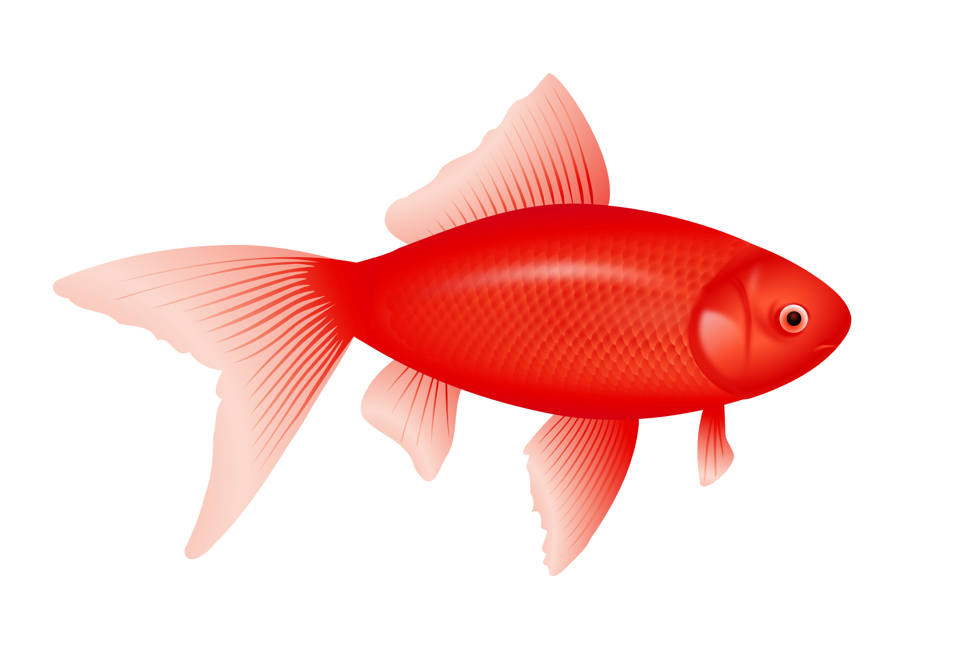 clip freeuse Red b png image. Goldfish clipart 4 fish