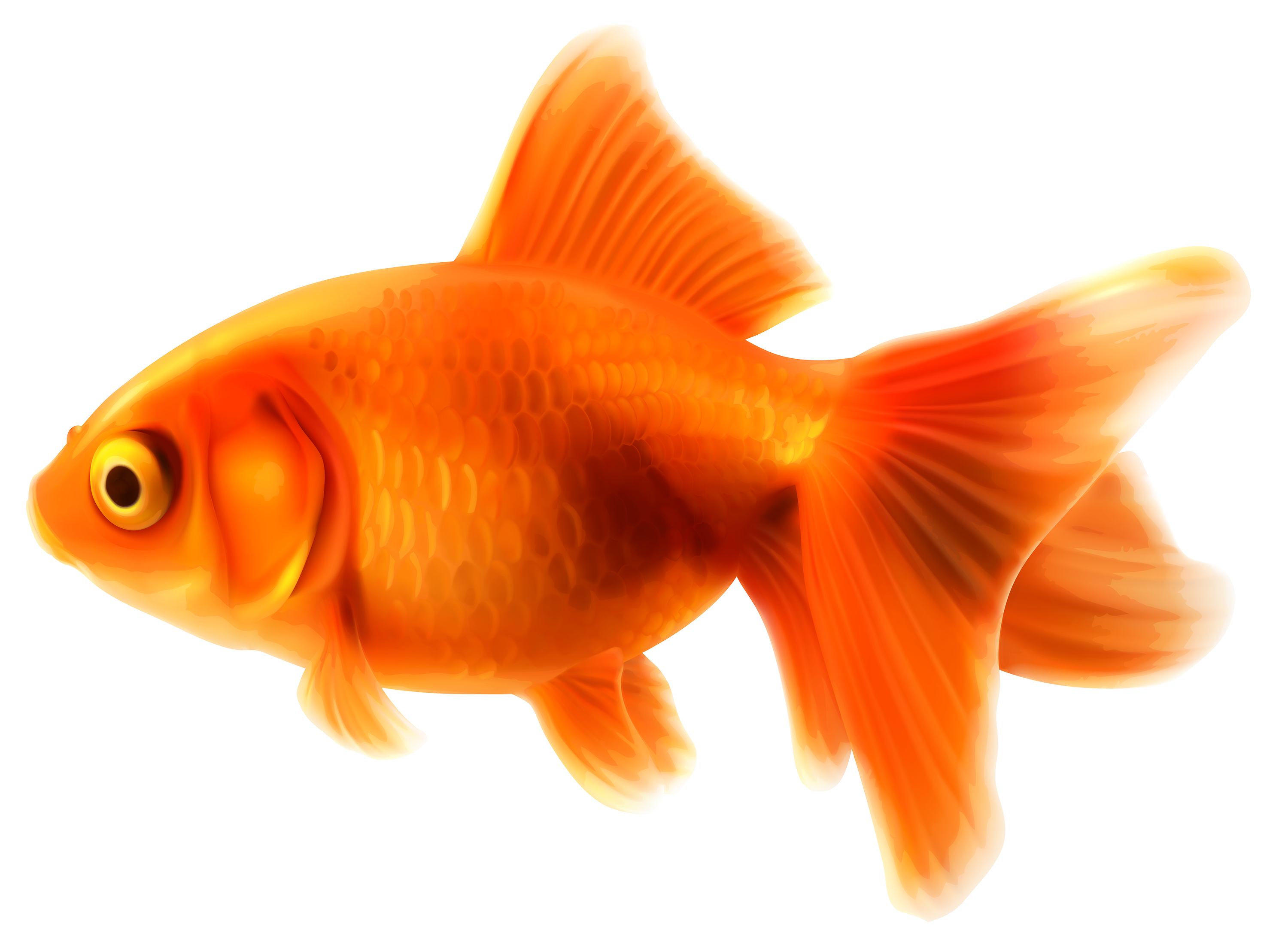 vector free Png best web. Goldfish clipart