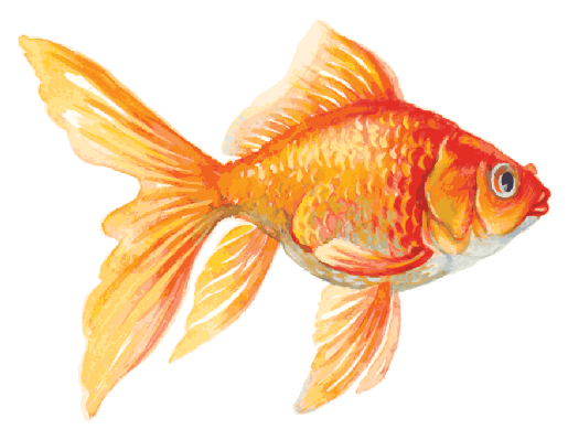 clip black and white The arts image pbs. Goldfish clipart.