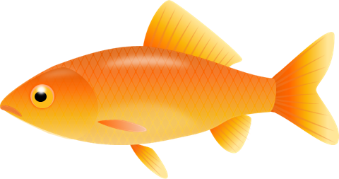svg royalty free stock The top best blogs. Goldfish clipart