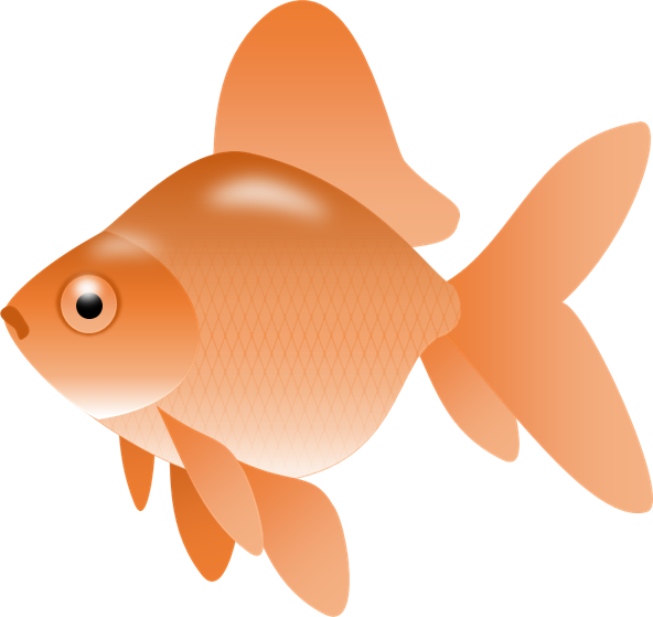 clipart royalty free Goldfish clipart clip art. Image of gold fish