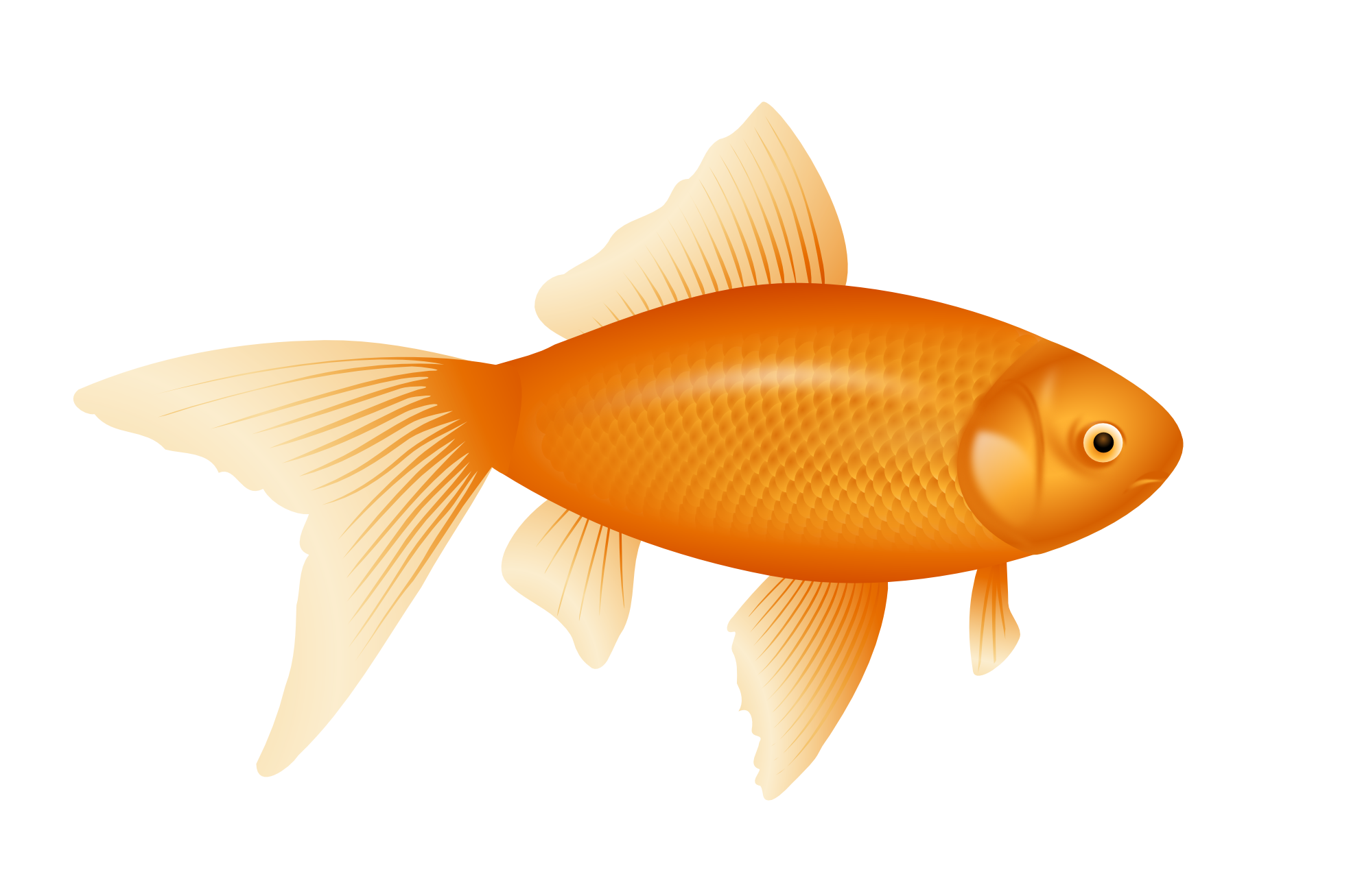 vector black and white stock Goldfish Clipart realistic