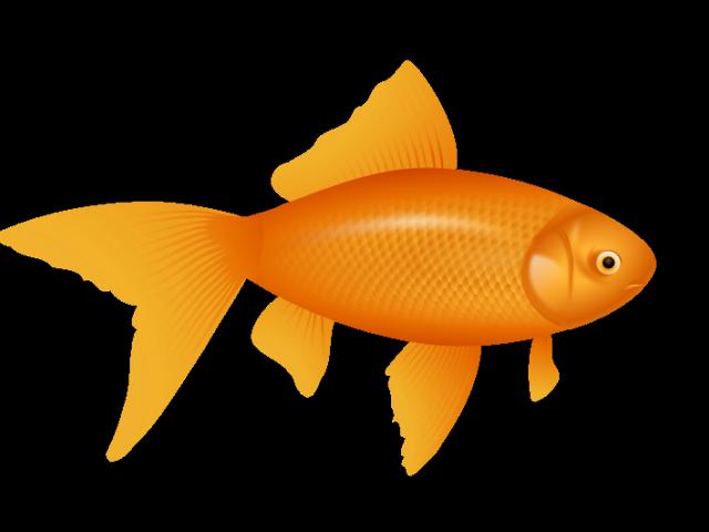 png transparent download Goldfish clipart cute. Free on dumielauxepices net